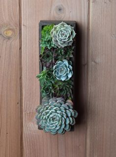 Succulent Wall Art in Handmade Ceramic Planter