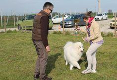 Best in show: Il vincitore, Akito the Samoiedo! / the winner, Akito the Samoyed