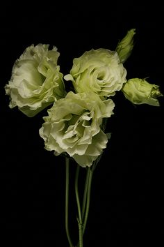 Lisianthus. Thank you Linnaea Floral for your suggestion!  Beautiful color.