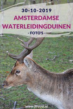 Ik maakte een wandeling in de Amsterdamse Waterleidingduinen en spotte o.a. damherten en paddenstoelen. Kijk je mee wat ik allemaal zag? #awd #paddenstoelen #damhert #wandelen #hiken #natuur #jtravel #jtravelblog #fotos