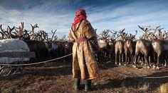 Sibiřský kmen přežívá vnehostinných podmínkách. Živí se syrovým sobím masem