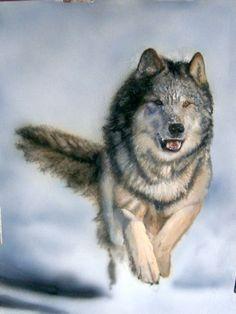 Running Wolf...beautiful..as long as it not running towards me!