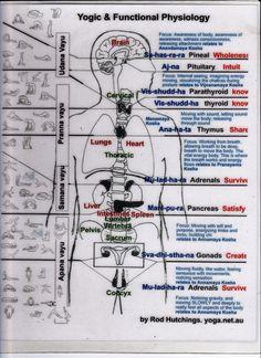 Fisiologia yogica, chakras y asanas. Chakras asanas correlation