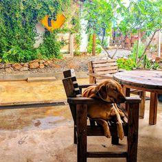 This dog's so chill. Valle de Guadalupe Baja California Mexico  #wanderlust #travelingcouple #travelphotography #dogs #valledeguadalupe #mexico #bajarats #cheerstotravels #theamazingadventures #uniladadventures #rainyday #worldtraveler #globetrotter