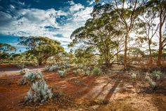 Loving Kalgoorlie...The richness in colour is all around us! Photo by: Bern Foo