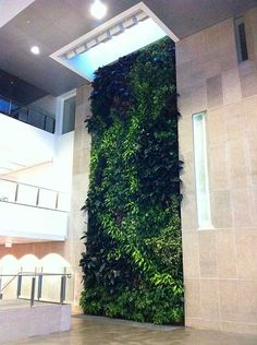 Living Wall Carleton University