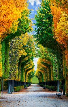 Fascinating Tree Tunnel, Schonbrunn Gardens, Vienna, Austria