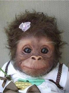 """I keep seeing this as """"Baby monkey"""" or """"Cute baby monkey."""" -- It definitely is cute, but it's a baby monkey DOLL. This is """"Cookie"""" and she's an Amy Ferreira """"Amy's Pipsqueaks"""" Reborn doll. (Slide 2 of 19 at the click-through. Cute Baby Animals, Animals And Pets, Funny Animals, Funny Cats, Animal Babies, Animals Photos, Wild Animals, Smiling Animals, Funny Drunk"""