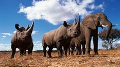 John Kasich, Ohio State House, Ohio State Senate, Marilyn Slaby, Marcia Fudge: Enact Legislation for Outlawing Ivory and Rhino Horn in the State of Ohio