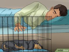 How to Crate Train Dachshunds. Crate training is a method that uses a dog's natural denning instinct to manage their behavior. Whether you're potty-training a dachshund puppy or introducing an older dachshund to a new home, this method is. Dachshund Breed, Long Haired Dachshund, Dapple Dachshund, Chihuahua Dogs, Pet Dogs, Dog Training School, Training Your Puppy, Potty Training, Training Classes
