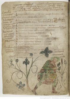 Anonyme, De ponderibus medicinalibus (3r). Pseudo-Hippocrates latinus, Epistola ad Maecenatem (3v-5v). Antonius Musa, Epistola de herba vetonica (19-22v). Pseudo-Apuleius, Herbarius (sive Liber de nominibus et virtutibus herbarum) et Pseudo-Dioscorides, De herbis femininis (22v-63v).