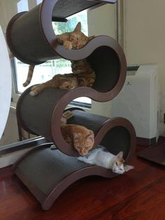 Nap Time at the Cat Hotel...  ~~  Houston Foodlovers  (Man, my cats would LOVE this!)