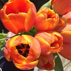 Sunshine and tulips make for a pretty great  Monday ;) ❤️