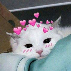 61 Ideas memes apaixonados animais for 2019 Cute Cat Memes, Cute Love Memes, Funny Cats, Dog Memes, Cute Kittens, Cats And Kittens, Baby Animals, Funny Animals, Cute Animals