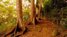 Caminos perdidos del parque La Flora