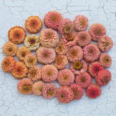 Curated exclusively for terrain by Washington's Floret Flowers, this collection of six seed varieties will sprout a summer garden of crisp green Zinnia Garden, Cut Flower Garden, Flower Farm, Garden Plants, Small Flowers, Diy Flowers, Beautiful Flowers, Wedding Flowers, Oklahoma