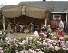 life size stables for nativity scene - 2 front posts, large fabric drapes over top/front and background.