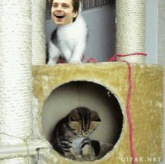 ^_^ poor kitten Seb