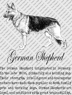 GERMAN SHEPHERD DOWNLOAD Instant Digital Vintage Art with Description Printable Frame Cards Fabric Transfer Iron On by RosiesVintageArtShop on Etsy