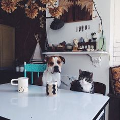 dog and cat sit down for breakfast--chuckle