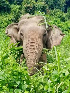 ELEFANT ELEPHANT XL-Tasche aus schwerem Leinenstoff kostenloser Versand