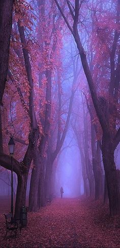 Fog in forest path