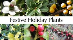 Forestfarm Plant Nursery Online One Of The 2 Best Sources D Recommends