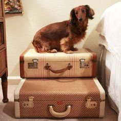 suitcase pet stairs (From discontinued blog) >> have the suitcases... would this fit in my bedroom?