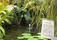 Oulun kasvitieteellinen puutarha Parsley, Gardens, Herbs, Museum, Outdoor Gardens, Herb, Garden, House Gardens, Medicinal Plants