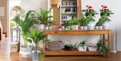¿Qué plantas están de moda?