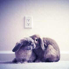 Bunnies Exchange Secrets - April 26, 2012