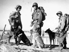 WWII soldiers and their K-9 dogs are ferried across the Irrawaddy river in Burma. Photographer Unknown