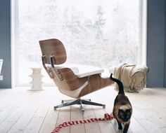 Brilliant Iconic Eames Chair With Brown Color Design Ideas Framed By The Solid Wood On The Hardwood Floor Transparent Curtain #villa.