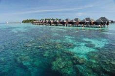 Best Luxury Resort on TripAdvisor. Island Resort in The Maldives. Luxurious Villas & Suites, Award Winning SPA Treatments and Fine Dining Restaurants. Maldives Honeymoon, Maldives Resort, Resort Spa, Vacation Deals, Best Vacations, Coral Life, Places To Travel, Places To Visit, Maldives Holidays