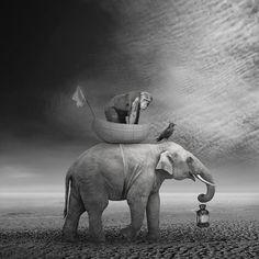 Surreal Art and Surrealism Image Elephant, Elephant Love, Elephant Art, Elephant Family, Animal Photography, Fine Art Photography, Digital Photography, White Photography, Nature Sauvage