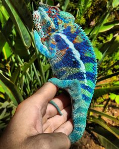 The Reptile Report is your one stop for the most interesting news, stories, and photos of reptiles, amphibians, and invertebrates. Reptiles Et Amphibiens, Cute Reptiles, Cute Creatures, Beautiful Creatures, Animals Beautiful, Cute Baby Animals, Animals And Pets, Funny Animals, Chameleon Pet