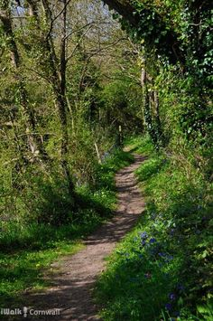 Path around one of the small creeks leading from Little Petherick Creek, Cornwall