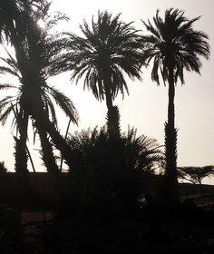 Moroccan Sahara Exploration, palmtrees against the sun - Maroc Désert Experience | Flickr #morocco http://www.marocdesertexperience.com