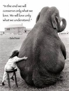 """In the end we will conserve only what we love. We will love only what we understand."" - Baba Dioum #quote"