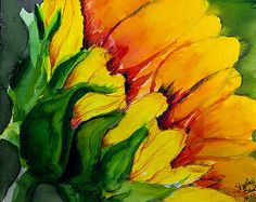Sarah's Sunflower