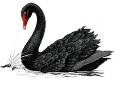 Inspired by the book written by Nassim Nicholas Taleb. This blog post explores a Strategic Planner's POV on the impact of the Black Swan to his world and how it stands challenged!