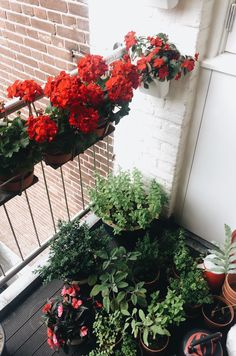 Balcony: plants, herbs and flowers
