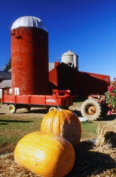 Across the country, farms are celebrating the season with family-friendly festivals where you'll find all the pumpkins, freshly baked desserts, and hay rides you could ever wish for. Get ready to layer up, lace up your boots, and make a trip to one of Americas' best pumpkin festivals.