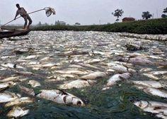 El río Citarum, situado al oeste de la isla de Java en Indonesia, es considerado el más sucio del mundo,con un nivel de contaminación alarmante. Lamentablemente está completamente lleno de basura debido a que todas las fábricas de la zona arrojan sus residuos sin control al río y los habitantes del pueblo hacen lo mismo con los deshechos orgánicos.