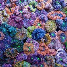 Coral Reef Aquarium, Marine Aquarium, Coral Reefs, Saltwater Tank, Saltwater Aquarium, Coral Fish Tank, Sps Coral, Marine Tank, Aquascaping