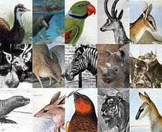 A lista de animais que já passaram pela Terra é enorme. Nos últimos 250 anos, muitos bichos sumiram do mapa graças à ação de predadores ou à caça. Conheça agora alguns destes animais - que você provavelmente nunca mais verá vivos. http://super.abril.com.br/galerias-fotos/conheca-15-animais-foram-extintos-ultimos-250-anos-692346.shtml