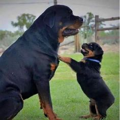 Mamma ascoltami!!!