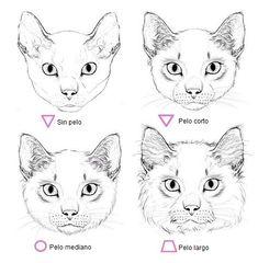 Gatos para dibujar 11 Simple Cat Drawing, Cat Face Drawing, Drawing Ideas, Drawing Faces, Drawing Art, Drawing Tips, Figure Drawing, Draw Tutorial, Cat Drawing Tutorial