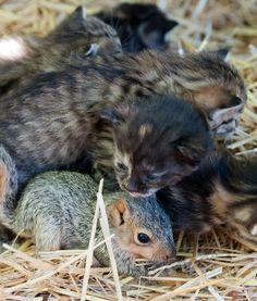 Gata cuida de esquilo órfão junto com sua pequena cria.
