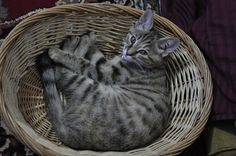 Today's Edition of 'Basket' Cat